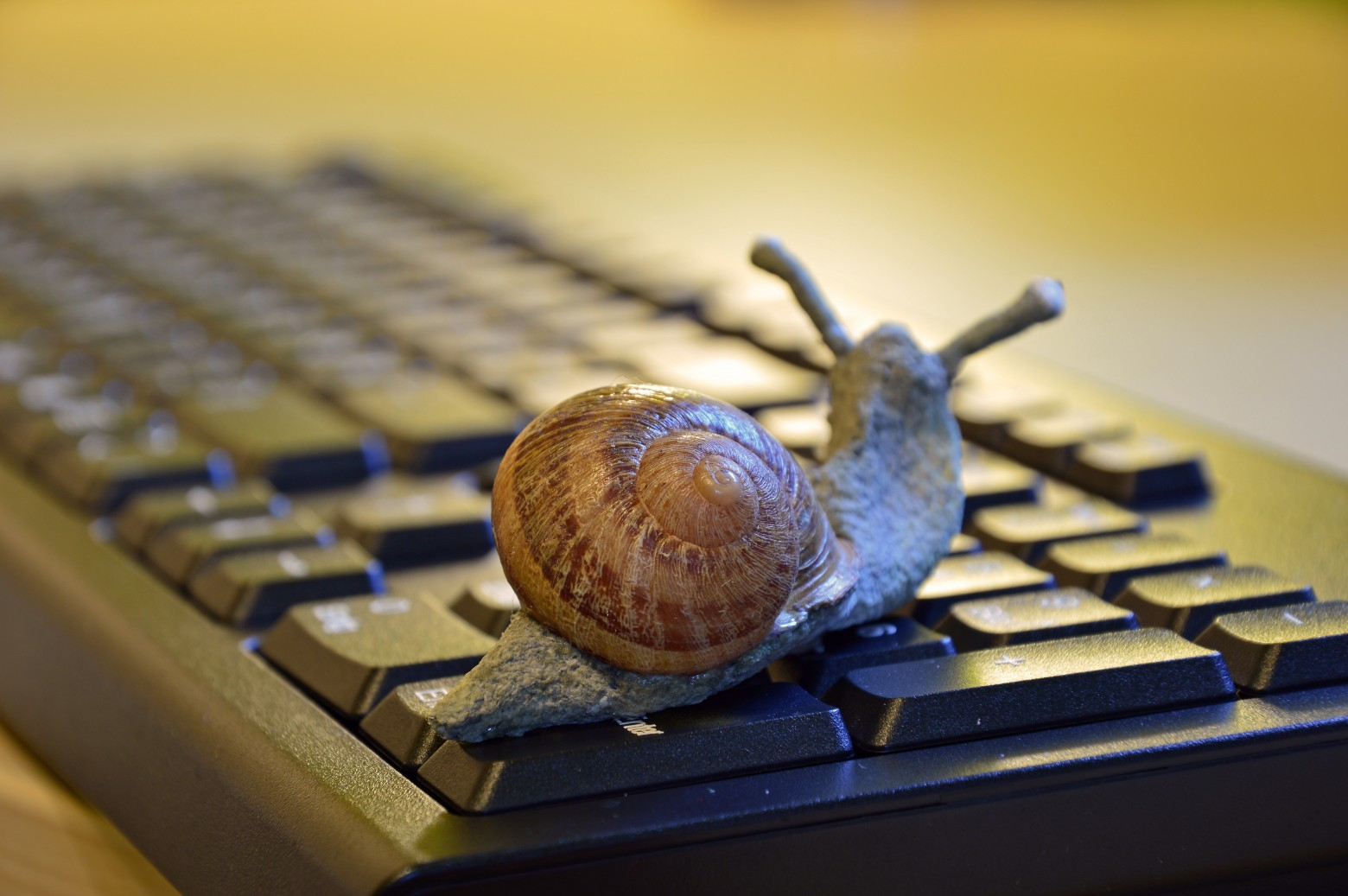"SIGNS OF ""SNAIL"" EMPLOYEES"